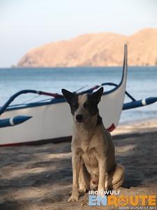 Nagsasa Dog