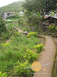 Demang Path Way