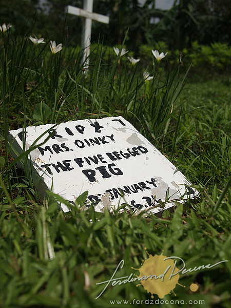 Paradizoo's Pet Cemetery