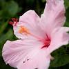 Flower no 3.