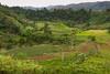 Mountain agricultural landscape near Bendum Village in Bukidnon, Mindanao, Philippines, June 2017. [Bendum 2017-06 051 Bukidnon-Philippines]