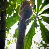 That's the second one our Tarsier guide could spot - he's not comfortable with the tourist visit and will soon hop off this branch.