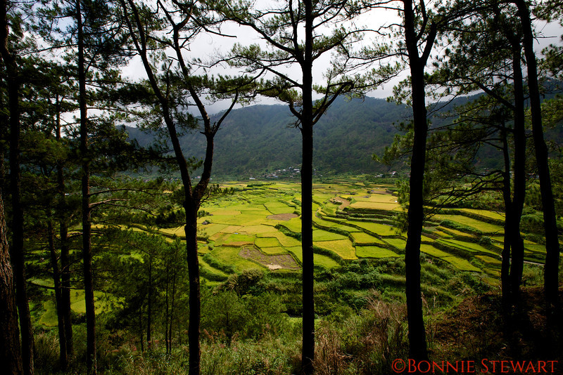 Kiltipan rice terraces