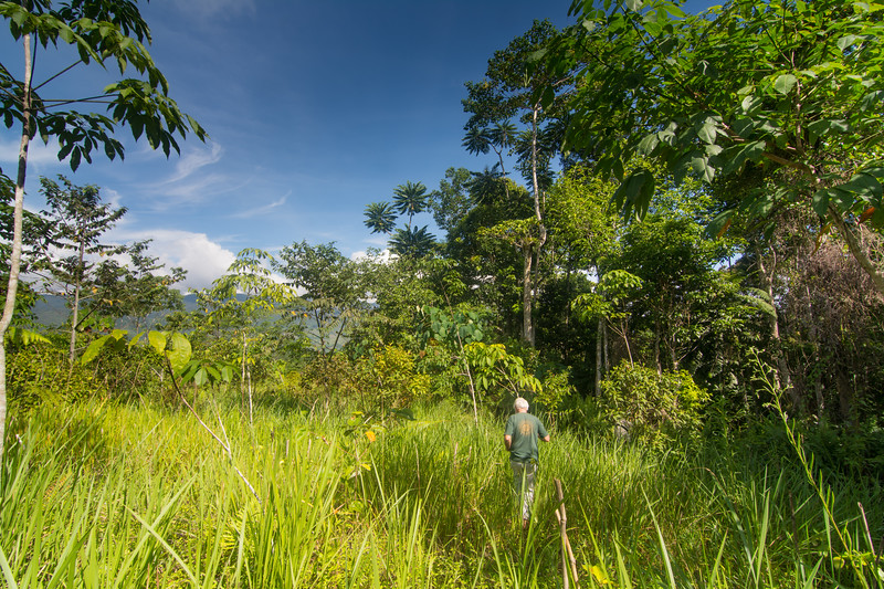 Pedro walks along the edge of the native forest restoration project he and the local youth have created at Bendum, Bukidnon Province, Mindanao, Philippines, June 2017. [Bendum 2017-06 016 Bukidnon-Philippines]