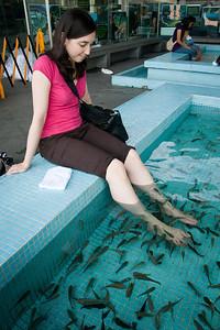 The fish spa in Manila ocean park.