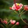 More nice flowers in Manila's gardens.