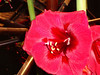 Philly-Flower_2014_Mar_09