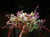Philly-Flower_2014_Mar_06