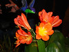 Philly-Flower_2014_Mar_34