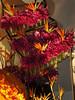 Philly-Flower_2014_Mar_11