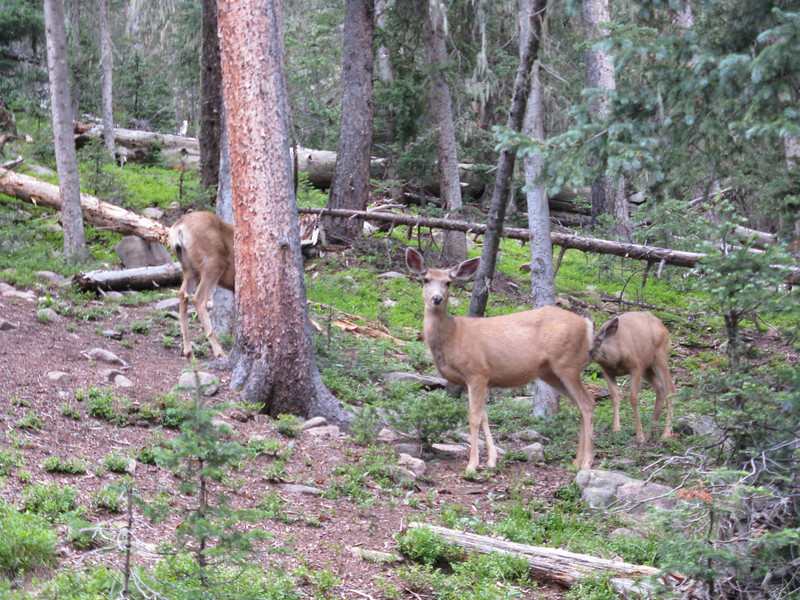 The deer were fearless, but we couldn't get very close without them hurrying off.