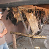 Buffalo hides being worked on. We got to try scraping the hide.
