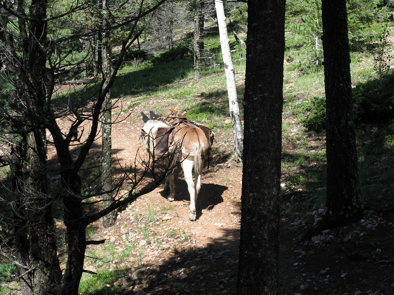 We met an old miner on the trail with his burro.