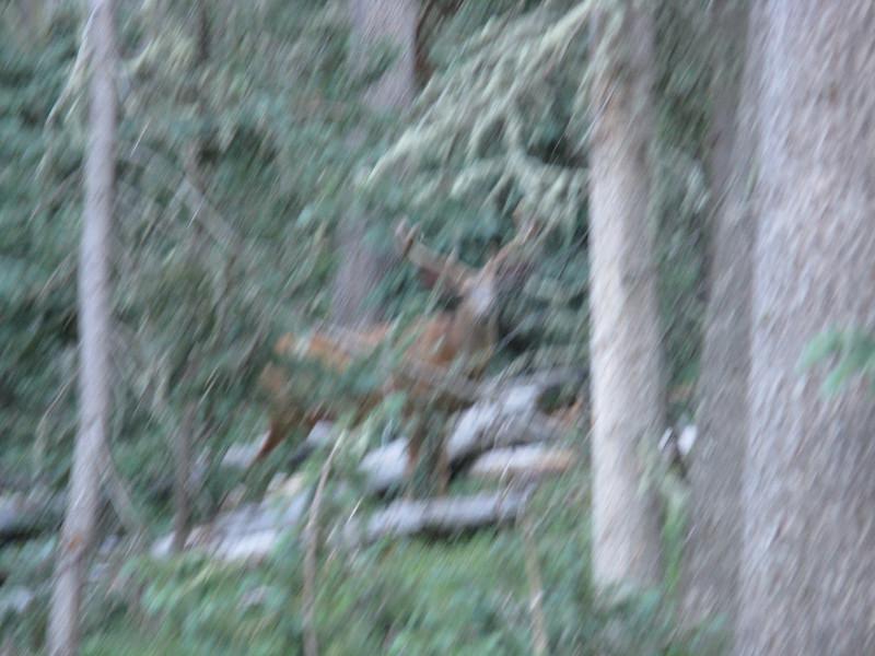 More deer in the woods.