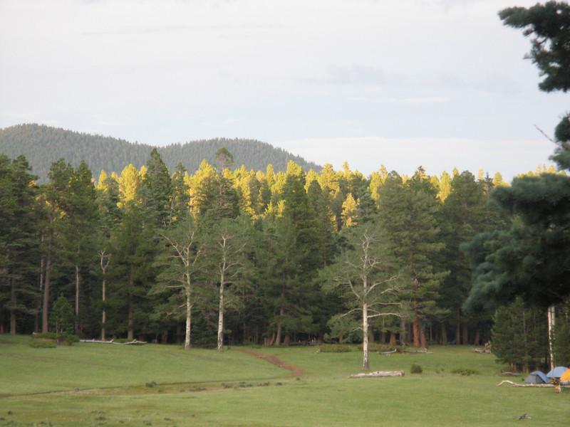 A beautiful alpine glow on the trees.