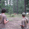 Deer were very tame and came right into our camp.