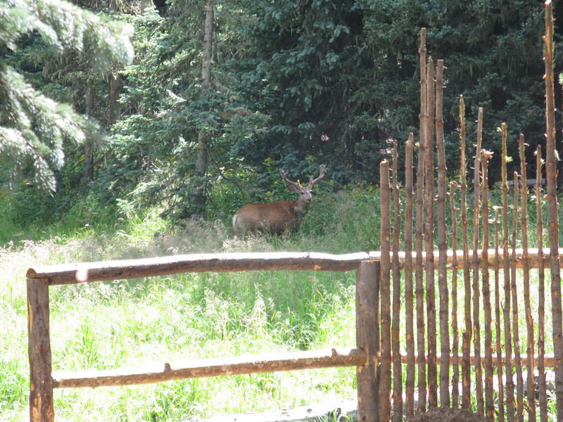 Another deer sighting.