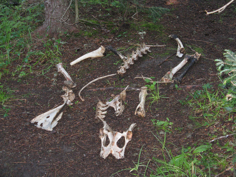 Some bones on the trail.