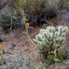 Cactus near Scottsdale, AZ