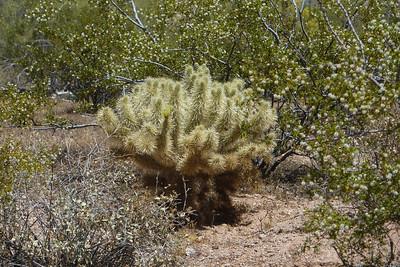 Phoenix, AZ Apache Trail drive 2013