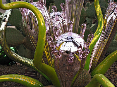 "Mirrored Mexican Horns by Dale Chihuly. Part of the ""Nature of Glass"" exhibit at the Desert Botanical Garden in Phoenix"