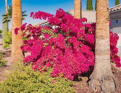 SC-West Neighbor Flowers-06806