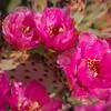 SC-West Neighbor Flowers-06995