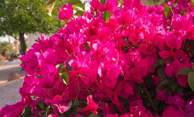 SC-West Neighbor Flowers-06811