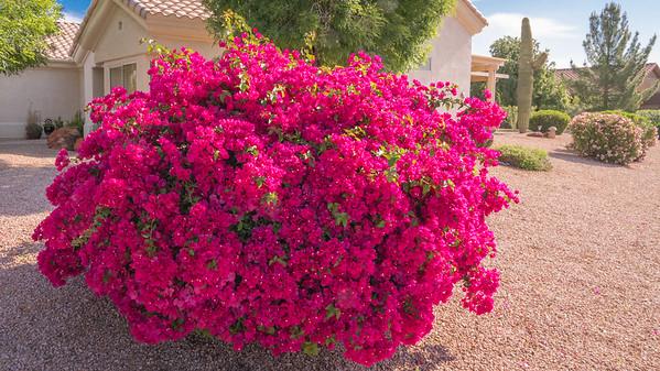 SC-West Neighbor Flowers-06812