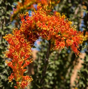 SC-West Neighbor Flowers-06809