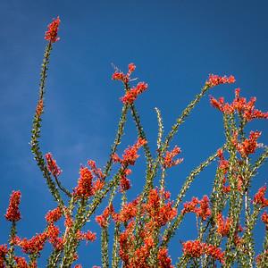 SC-West Neighbor Flowers-06816
