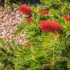 SC-West Neighbor Flowers-07227