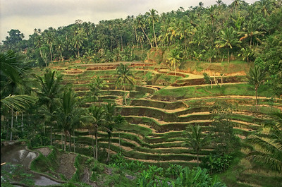 Rice Terraces, Bali, Indonesia-1997