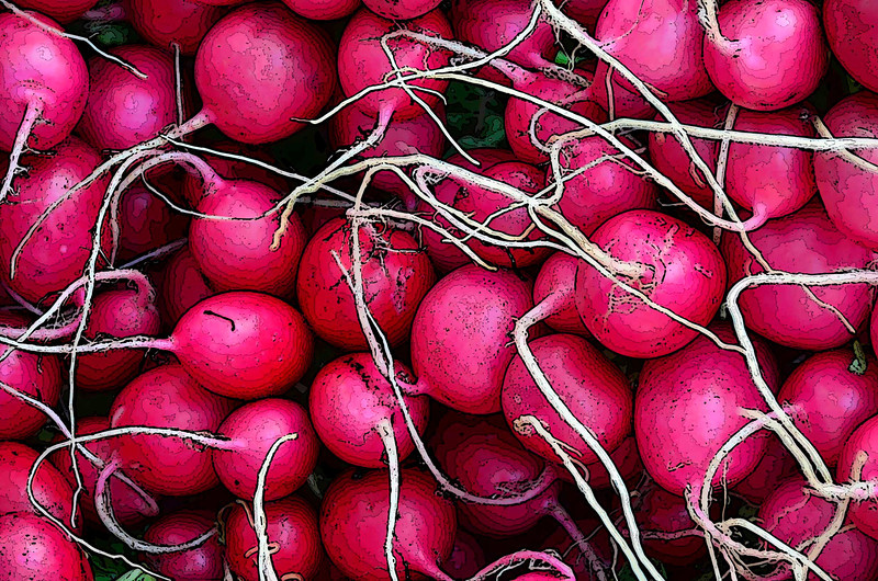 Radishes on display at the farmers market, enhanced with poster edges.