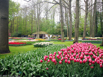 Photos from Keukenhof Gardens, Netherlands, April 2007