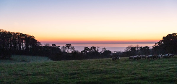 The Flock at sunset - English Channel Backdrop - Rousdon, Lyme Regis, Devon