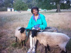 My dream of becoming a sheep farmer.