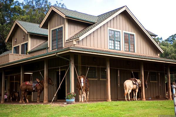 Piiholo Ranch, Maui, Hawaii 11-15-10