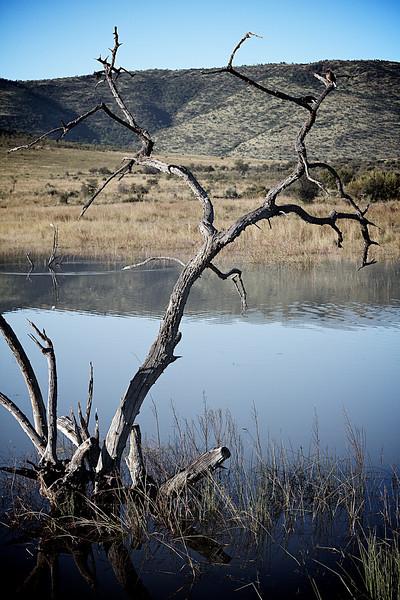 epic dead tree lake hill