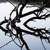 gnarly bird tree lake photo