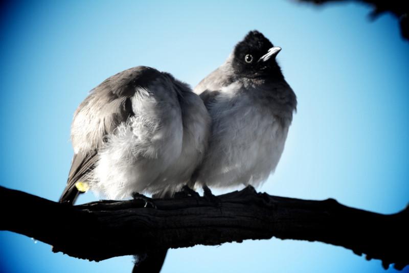 close up on 2 little birdies