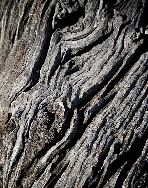 gnarly tree close up