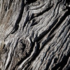 gnarly tree close up