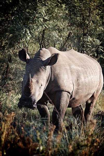 more rhino