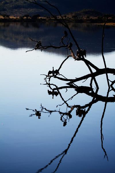 different shot of tree bird lake reflection