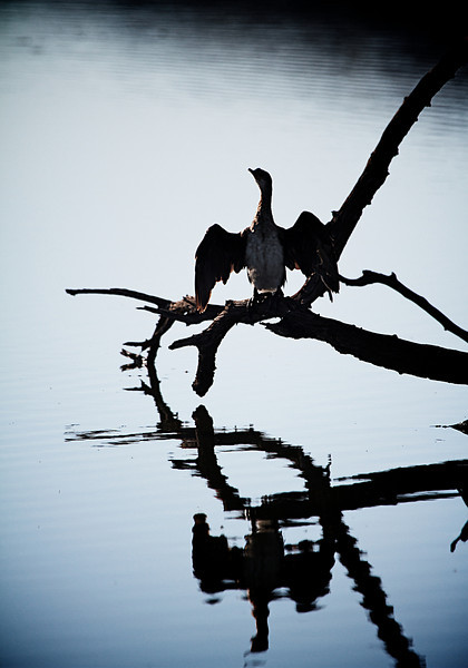I call this Bird Reflection Lake