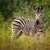 Baby Stripes