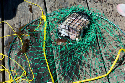 A crab trap and small crab that was released after I took this shot.