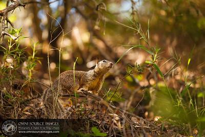 Squirrel at Pinnacles National Monument