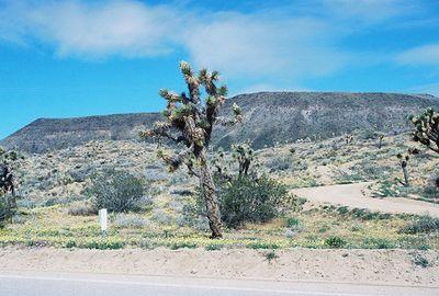 """4/4/04 """"Desert Wildflower Excursion"""", Rancho Santa Ana Botanic Garden trip (w/Lorrae Fuentes)."""